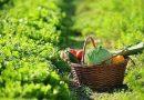 Agricoltura, finanziamenti ed opportunità per giovani e imprenditoria femminile
